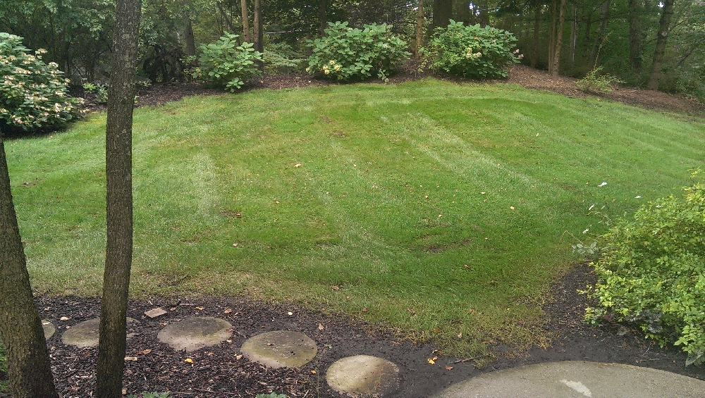 Yard - Mowing service came this morning and it took them 20minutes with their zero turn mower