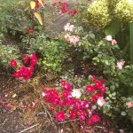 Yard - flowers blooming by lower deck