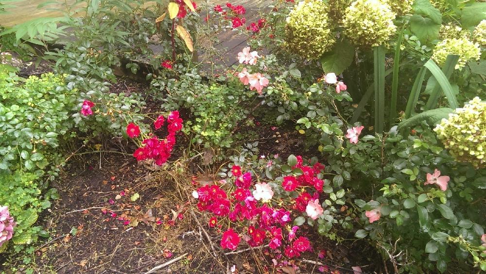 Yard - flowers blooming by lower deck